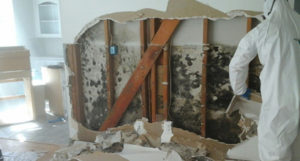 mold remediation near wadsworth picture of mold inside a house wall