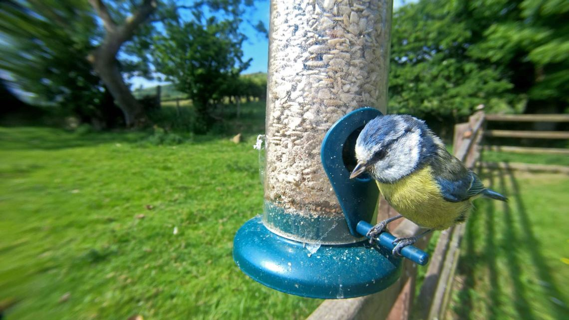 Garden Birds To Feed Or Not To Feed Bto British Trust For Ornithology