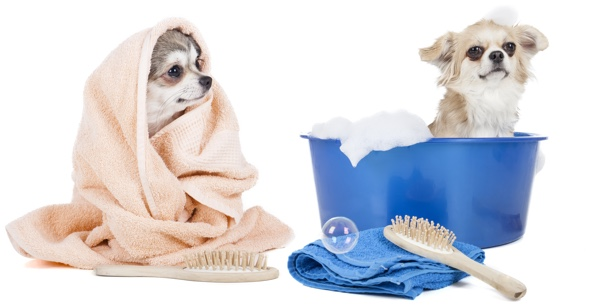 Dog grooming and bathing bubbles pet spa bubbles pet spa dog grooming solutioingenieria