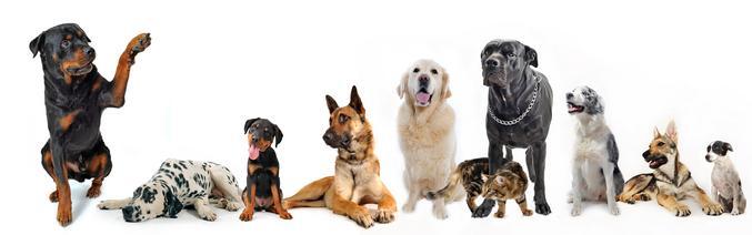 The Club @ Bubbles Pet Spa