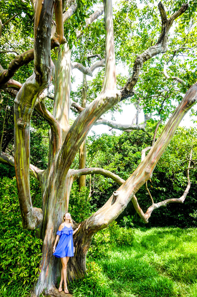 Rainbow Eucalyptus Trees | Driving the Road to Hana | Maui | Hawaii | Bubbly Moments