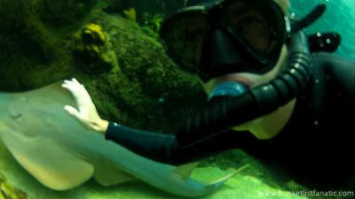 Swim With Stingrays - Bucket List