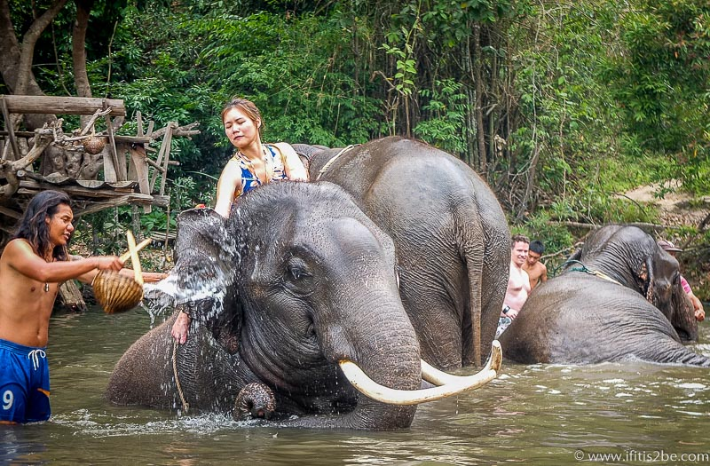 Taking a bath with elephants at Patara Elephant Farm outside Chiang Mai