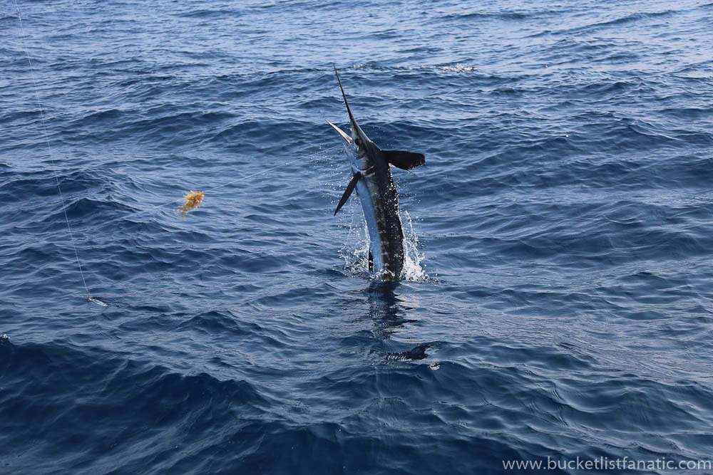 Catch a Blue Marlin - Mauritius Bucket List