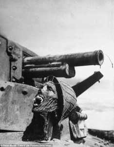 Japanese head atop burnt out tank on Guadalcanal.