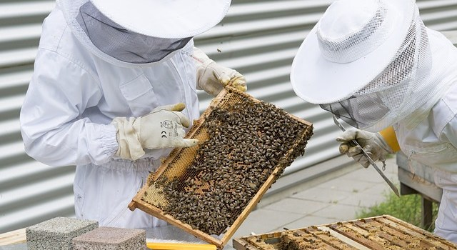 Bienensachverständige und Fachwarte November 2018