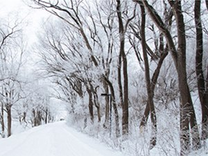 Winter Trees Featured Photo