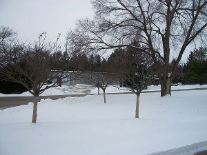Healthy Trees In The Winter