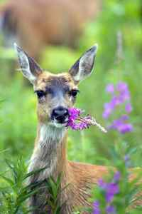 Deer Love Bulbs