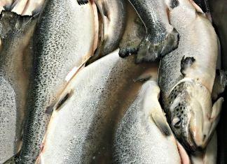Fish at Indian Ridge Provisions; photo credit Lynne Goldman