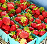 Blooming Glen Farm strawberries, photo credit Lynne Goldman
