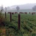 Tussock Sedge Farm; photo courtesy of Tussock Sedge Farm