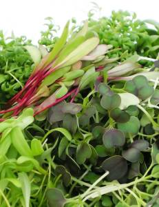Blue Moon Acres_Micro Greens Sampler