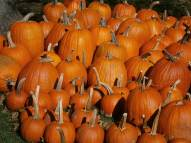 Fulper Farm pumpkins