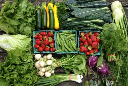 Spring share from Blooming Glen Farm; photo courtesy of Blooming Glen Farm
