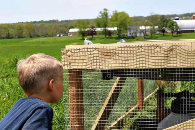 Tyler & Hershberger chicken tractor_photo credit Shelah Layton