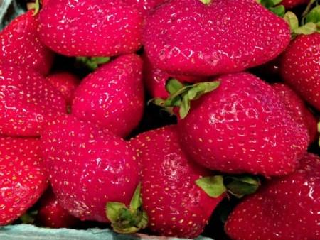strawberries_Fairveiw Farm_June 11 2015