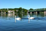 The Landing_swans; photo courtesy of the Landing