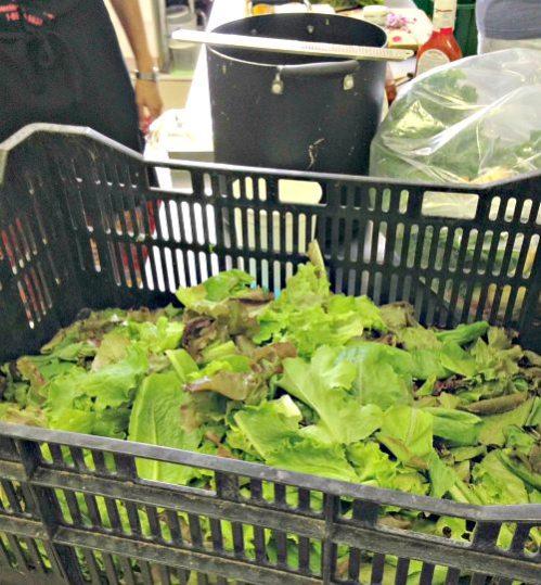 Donated lettuce at Centenary United Methodist Church; photo credit Lynne Goldman