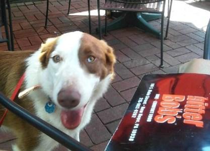 Jasper at Bitter Bob's