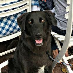 Woof! 35 dog-friendly restaurants in Bucks & nearby