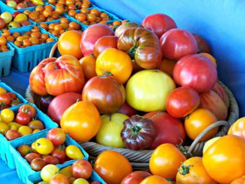 Tomatoes_Blooming Glen Farm_photo Lynne Goldman