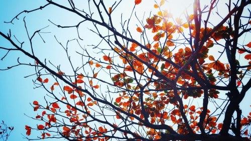 Autumn, Pexels.com
