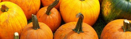 Pumpkins; photo credit L. Goldman