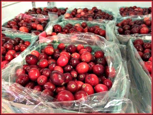 Cranberries, Manoff Market Gardens