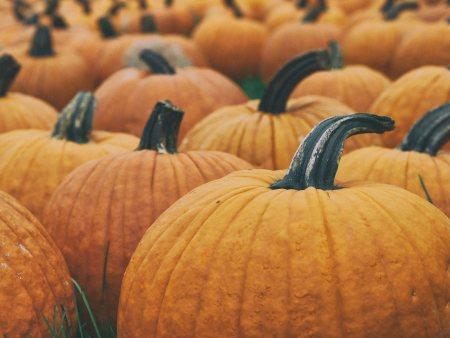 Pumpkin, Unsplash