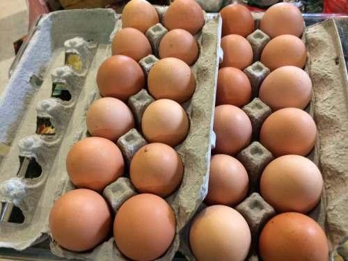 Eggs, Manoff Market Gardens