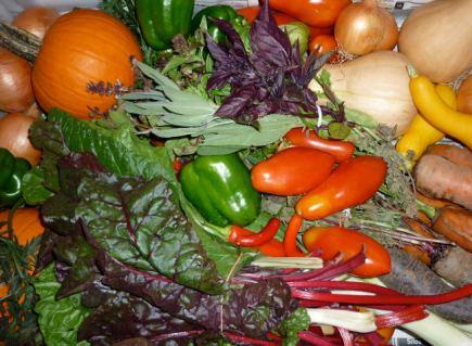 Fruits and veggies from Myerov Farm's CSA