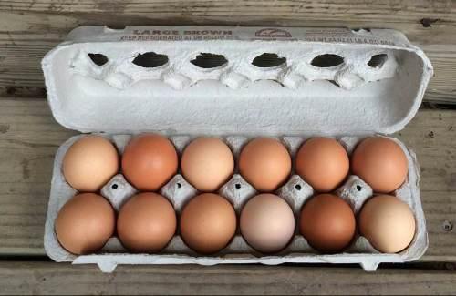 Eggs_Yardley Farmers Market_Bucks County