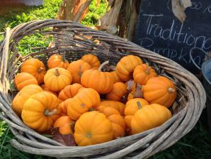 Pumpkins; photo credit Lynne Goldman