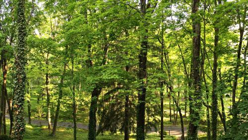 Summer trees in Bucks County: photo credit Lynne Goldman