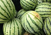 Watermelon from Blooming Glen Farm; photo credit Lynne Goldman