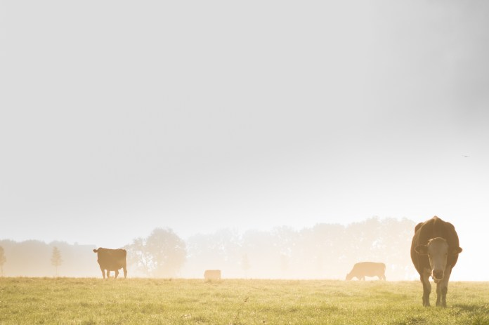 Landscape photo of fog and cows in the meadow, Pexels Photo Credit