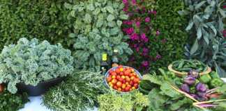 Garden, Photo credit: Bucks County Foodshed Alliance