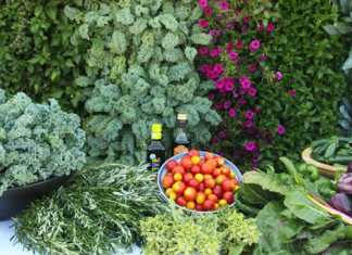 Garden, Photo credit: Bucks County Foodshed Alliance