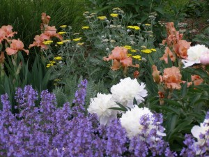 perennials, and annuals for landscape design