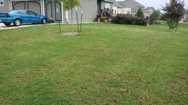 Lawn 2 weeks after total renovation