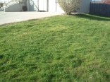 All new grass repaired in fall from bad summer weather.