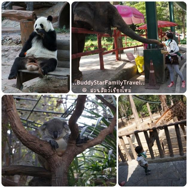 พาลูกเที่ยวเชียงใหม่,พาครอบครัวเที่ยวเชียงใหม่,พาลูกเที่ยว,พาครอบครัวเที่ยว,เชียงใหม่,ที่เที่ยว,เด็ก,ที่พัก,หมีแพนด้า,สวนสัตว์เชียงใหม่