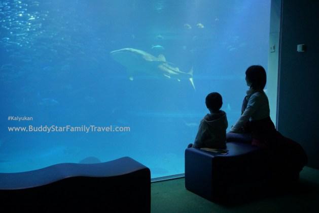 ที่เที่ยวเด็กโอซาก้า,kaiyukan,ฉลามวาฬ,อควาเรียม,นั่งรถไฟเที่ยวญี่ปุ่น,เที่ยวญี่ปุ่นด้วยตัวเอง