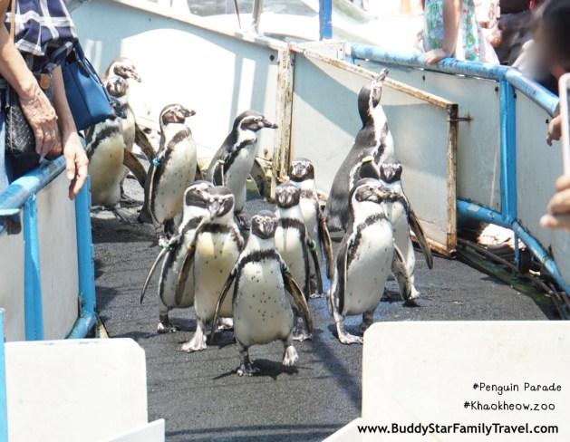เพนกวินพาเหรด, เขาเขียว, สวนสัตว์เขาเขียว, รีวิว, review, พาลูกเที่ยว