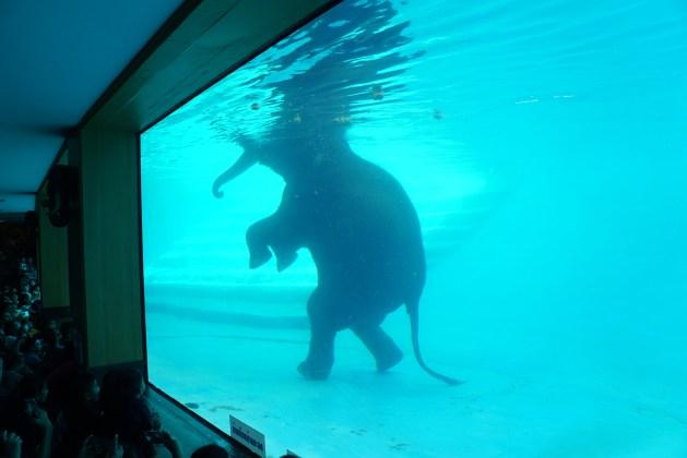 ช้างว่ายน้ำ, ช้างเล่นน้ำ, สวนสัตว์เขาเขียว, เขาเขียว, รีวิว, เด็ก