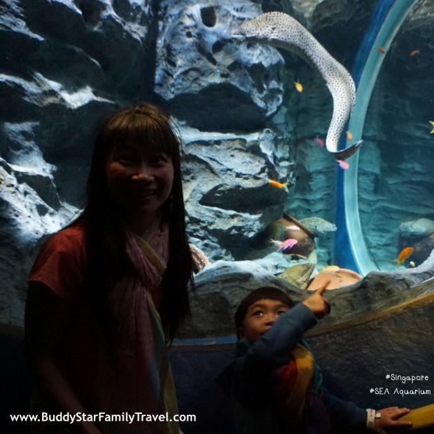 อควาเรียม, สิงคโปร์, Aquarium, SEA, อควาเรียมสิงคโปร์, รีวิว, Review