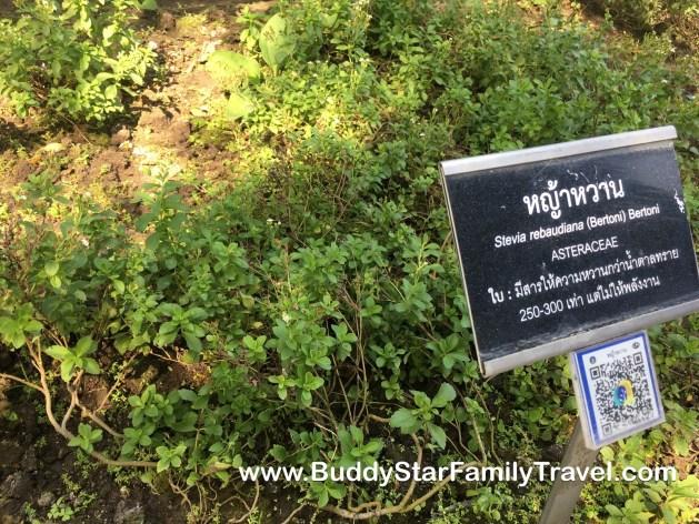 สวนสมุนไพร,มหิดล,ที่เที่ยว,เด็ก,กิจกรรม,พาลูกเที่ยว,รีวิว