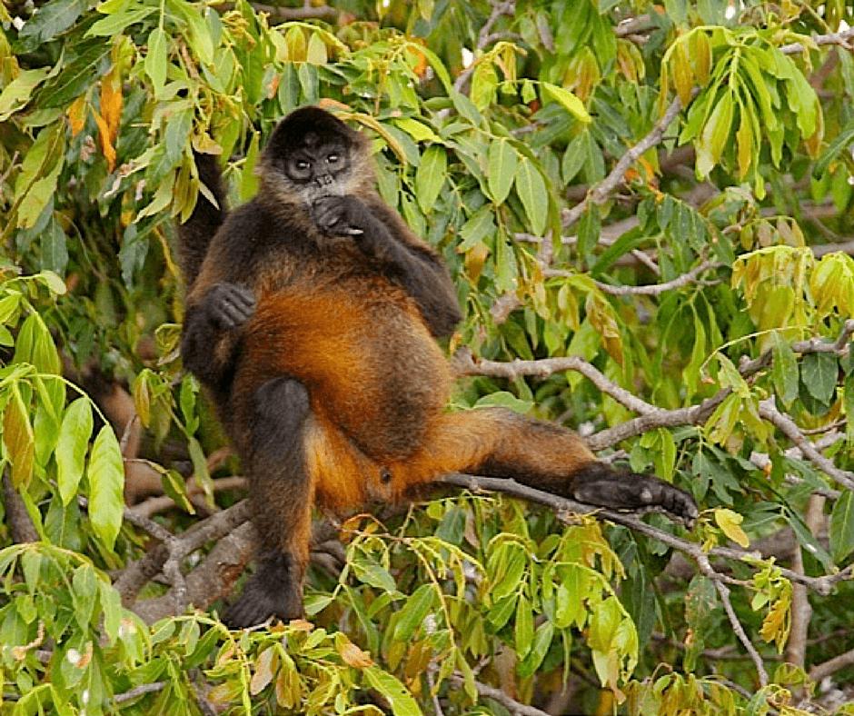 Buddy The Traveling Monkey Monkey Mondays