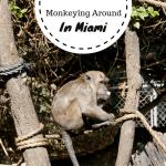 Monkeying Around In Miami